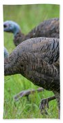 Wild Turkey In Shiloh Military Park Beach Towel