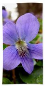 Wild Violet 1 Beach Towel