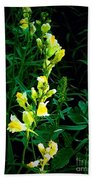 Wild Yellow Flowers On Black Background Beach Towel