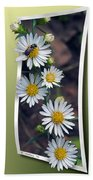 Wildflowers And Visitor Beach Towel