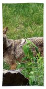 Wiley Coyote Beach Towel