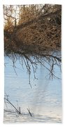 Willow Tree At Sunrise Beach Towel