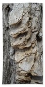 Willow Tree Bark Up Close Beach Towel
