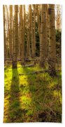 Windsor Trail At Dusk - Santa Fe National Forest New Mexico Beach Towel
