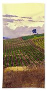 Wine Vineyard In Sicily Beach Towel