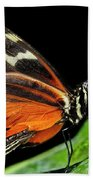 Wing Texture Of Eueides Isabella Longwing Butterfly On A Leaf Ag Beach Towel