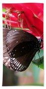 Wings Of Brown - Butterfly Beach Towel