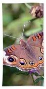 Wings Of Wonder - Common Buckeye Butterfly Beach Towel