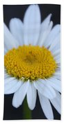 Winter Daisy Beach Towel