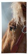 Winter Mustang Eye Beach Sheet