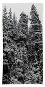 Winter Pine Spires Beach Towel