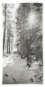 Winter Sunshine Forest Shades Of Gray Beach Towel