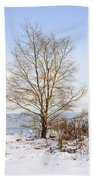 Winter Tree On Shore Beach Towel