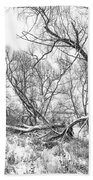 Winter Woods On A Stormy Day 2 Bw Beach Towel