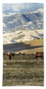 Wintering Grounds Beach Towel