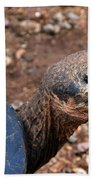 Wise Old Tortoise Beach Towel