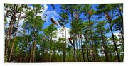 Withlacoochee State Forest Nature Collage Beach Towel