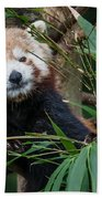 Wizened Red Panda Beach Towel
