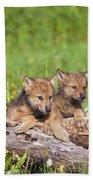 Wolf Cubs On Log Beach Towel