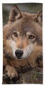 Wolf Face Beach Towel