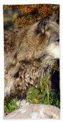 Wolf On Patorl Beach Sheet