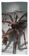 Wolf Spider Sunlight Beach Towel