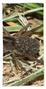 Wolf Spider With Babies Beach Towel