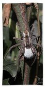 Wolf Spider With Egg Sac Beach Towel