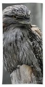 Wonderful Patterned Feathers On A Tawny Frogmouth Bird Beach Towel