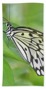 Wonderful Up Close Look At A Large Tree Nymph Butterfly Beach Towel