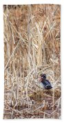 Wood Duck Drake 2 Beach Towel
