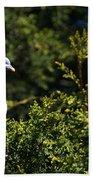 Wood Pigeon Beach Towel