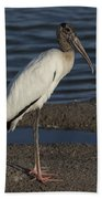 Wood Stork In The Final Light Of Day Beach Towel