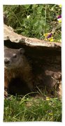 Woodchuck Ready For Spring Beach Towel