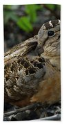 Woodcock At Rest Beach Towel