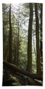 Wooded Serenity Beach Towel