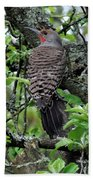 Woodpecker In The Apple Tree Beach Towel