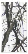 Woodpecker In The Forest Beach Towel