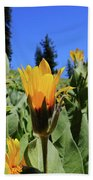 Woolly Mule's-ear At Lassen Park Beach Towel