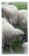 Wooly Times Beach Towel