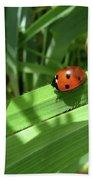 World Of Ladybug 1 Beach Sheet