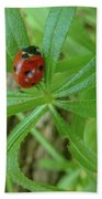 World Of Ladybug 3 Beach Towel