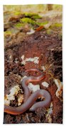 Worm Snake Beach Towel