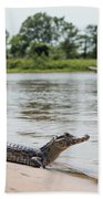 Yacare Caiman On Beach With Passing Boat Beach Towel