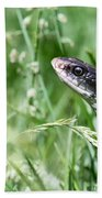 Yard Snake Beach Towel