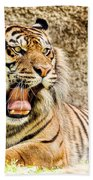 Yawning Bengal Tiger Beach Towel