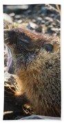 Yawning Marmot Beach Towel