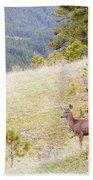 Yearling Mule Deer In The Pike National Forest Beach Towel