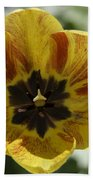 Yellow And Red Tulip Center Squared Beach Towel