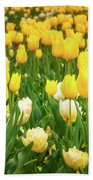 Yellow And White Tulips In Canberra In Spring Beach Towel